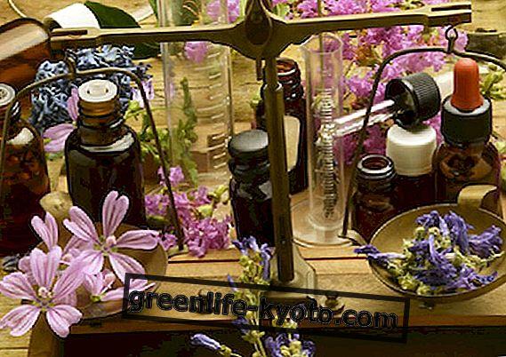 Bach cvijeće pomoći djeci upravljati anksioznost