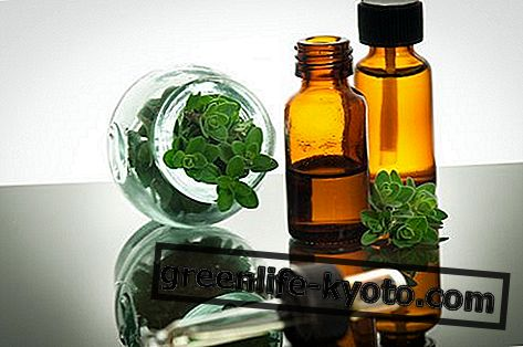 Eterično olje origana: lastnosti, uporaba in kontraindikacije