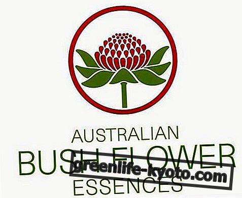 الزهور الاسترالية ، كل شيء على 69 الزهور
