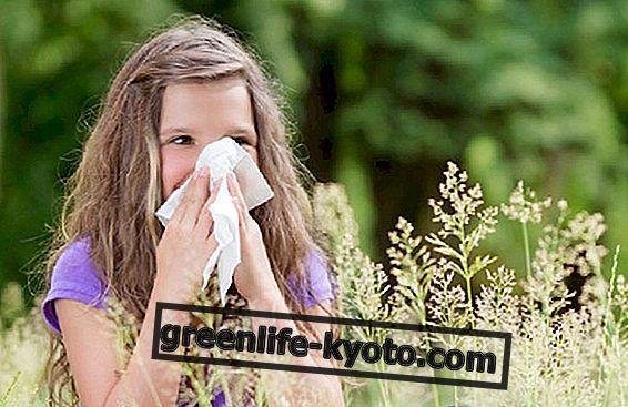 Hooajaline laste allergia: 3 taimseid ravimeid