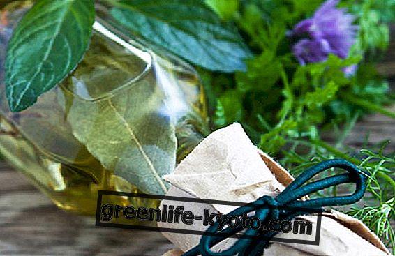 Cum se utilizează uleiul de laur