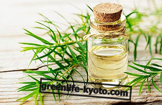 Arbatos medžio aliejus: kada jį naudoti