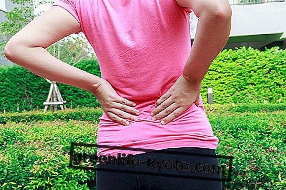 Arnica jest idealnym lekarstwem na ból pleców