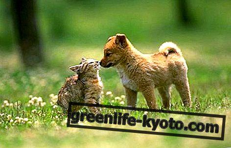 Universe Pets, die australischen Blütenessenzen für Tiere