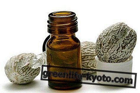 Essentiële olie van nootmuskaat: eigenschappen, gebruik en contra-indicaties