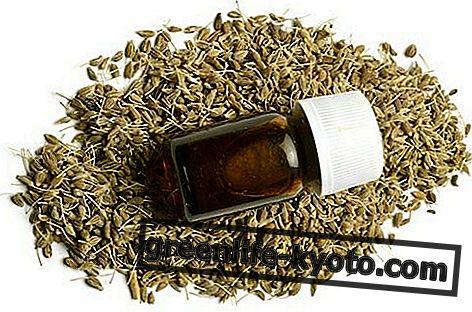 Aceite esencial de anís: propiedades, uso y contraindicaciones.
