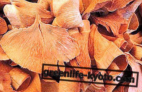 イチョウの母のチンキ剤:調製、性質および使用