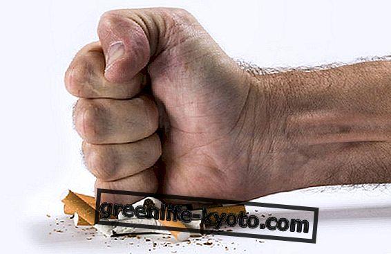 Cigarešu dūmi un Moringa oleifera: ko viņi ir kopīgi?