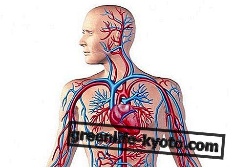 कार्डियो-वैस्कुलर सिस्टम, विकार और सभी उपचार
