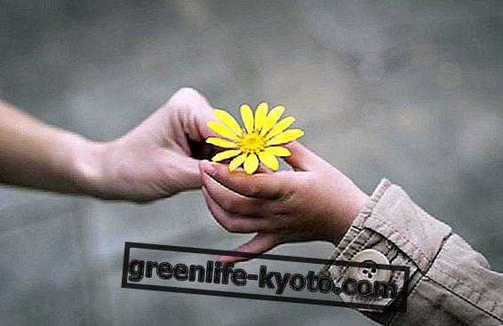 Ünnepeljük a kedvességet