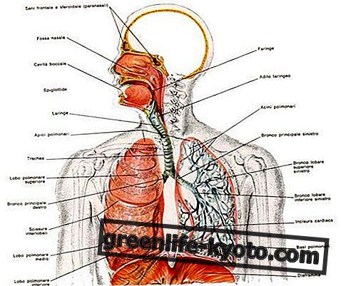 Αναπνευστικό σύστημα, διαταραχές και όλες τις θεραπείες