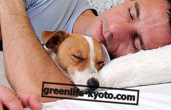 17 mars, Världsdagen för sömn