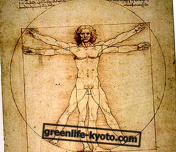लियोनार्डो के अनुसार मानव शरीर रचना विज्ञान