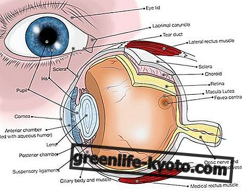 Conjunctivitis: symptoms, causes, all remedies