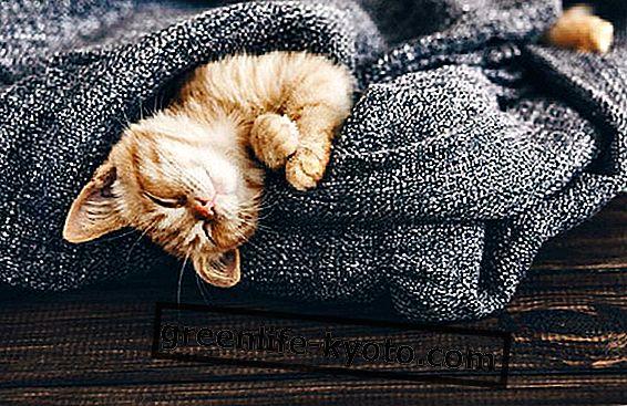 De 5 mest afslappende aktiviteter