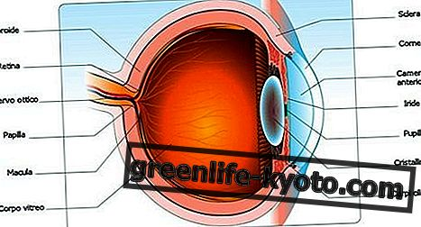 Silmät, häiriöt ja kaikki korjaustoimenpiteet