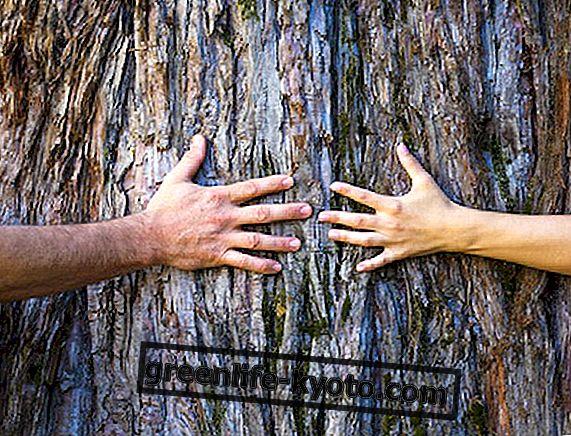 Sfaturi naturale pentru a revigora cuplul cu imaginație