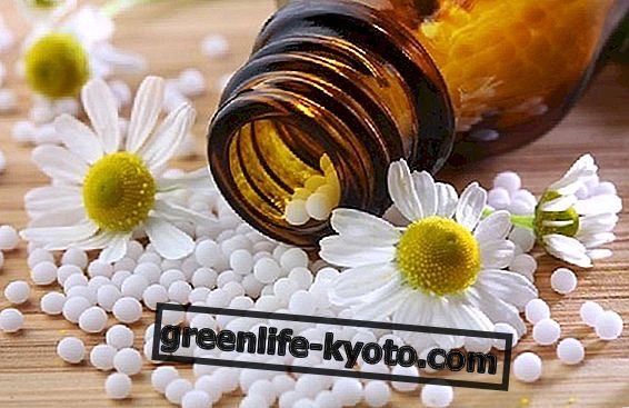 Homeopathy and phytotherapy for dermatological diseases