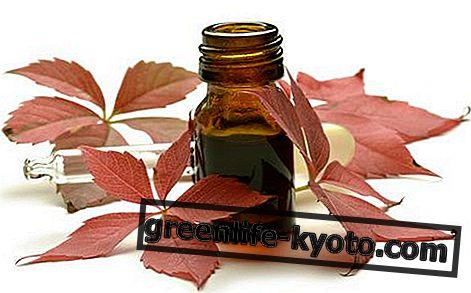 Hemoroidi izlječeni biljnom medicinom