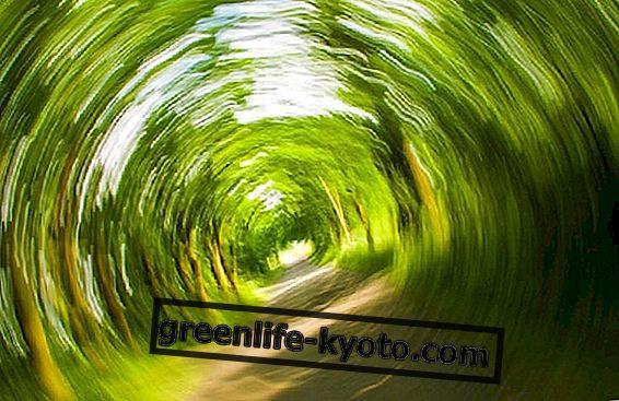 Labyrinthitis: oorzaken, symptomen en therapieën