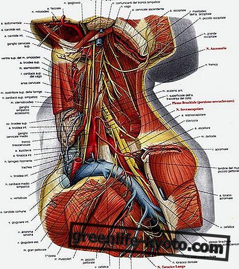 Gimdos kaklelis: simptomai, priežastys, visos gydymo priemonės