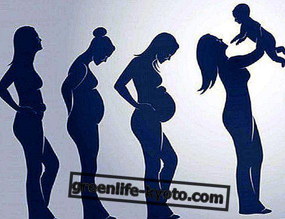 A terhesség szakaszai