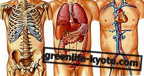 ร่างกายมนุษย์: การดูแลอวัยวะและสุขภาพ