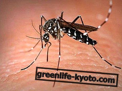 Vabzdžių įkandimai: simptomai, priežastys, visos priemonės