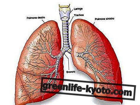 Plíce, poruchy a všechny léky