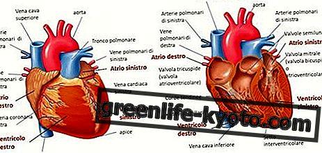 心臓、障害、そしてすべての治療