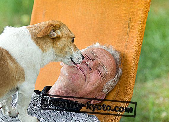 Lemmikkihoito ja vanhukset: isku yksinäisyydelle