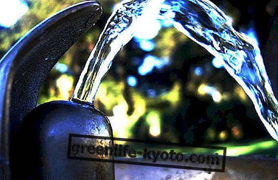 Dabas aizsardzības līdzekļi sausai ādai