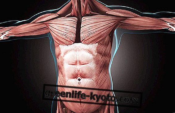 Emakakaela ja valu rinnus: milline suhe