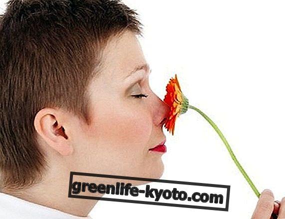 Přírodní produkty a Bachovy květy pro poruchy menopauzy