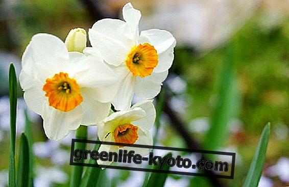 Proljetni ekvinocij i organsko pročišćavanje