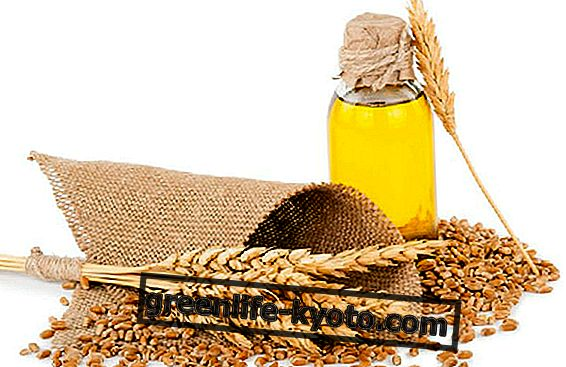 Pšeničné klíčky olej pro krásu vlasů