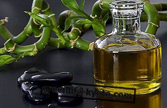 Masážní oleje: co jsou a jak je používat