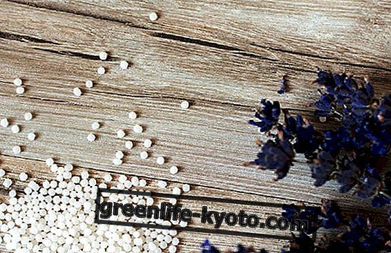 Homeopatia: AIFA tunnistaa uudet tuotteet