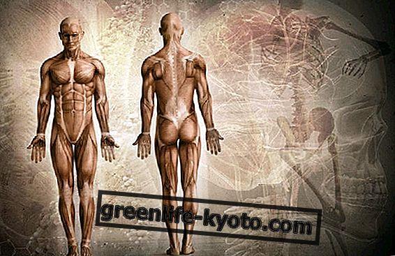 Dolor muscular: posibles causas y principales remedios.
