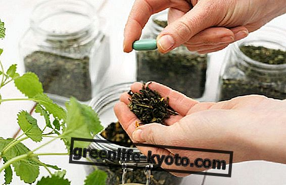 Naturopat i herbalist: sinergije