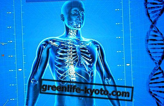 발 반사 구역 : 척추