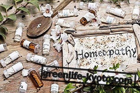 Ignatia Amara, viss par homeopātisko līdzekli