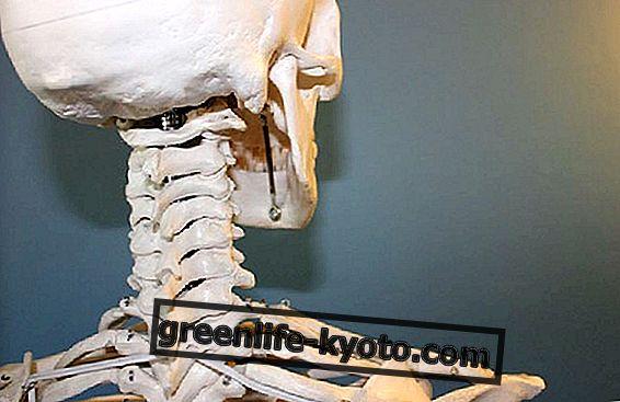 Osteoporóza a kosti pro život