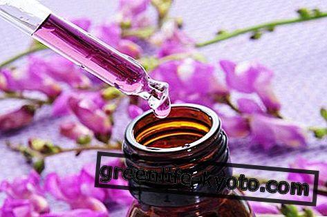 Blomsterterapi, beskrivelse og brug