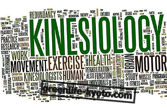 Kineziologie: výhody Touch for Health