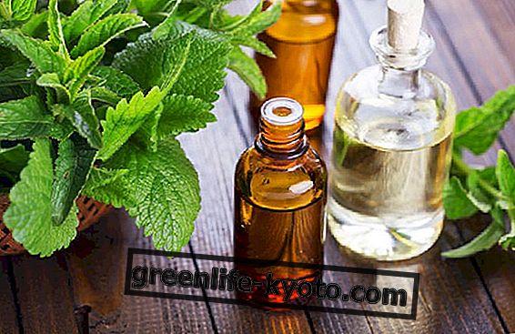 Olje meta, ne samo aroma in svežina