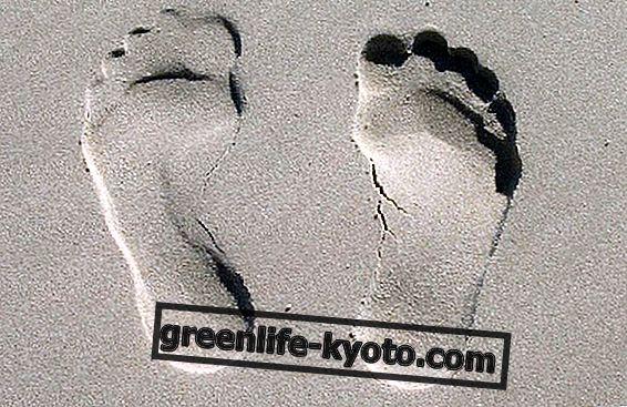 Harta ini adalah kesejahteraan mengikut peta refleksologi kaki