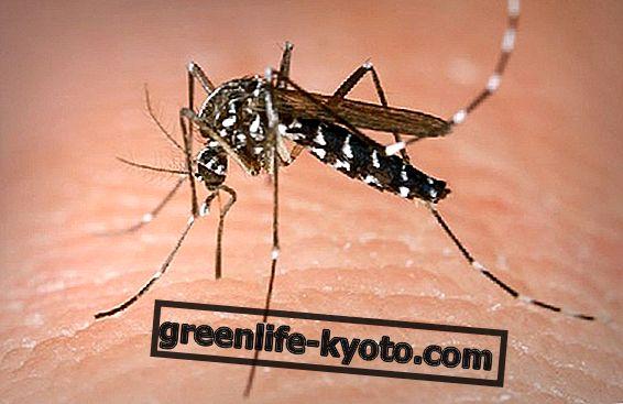 Vyhrajte válku s komáry přirozeně