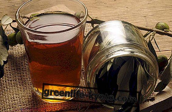 Sådan laver du olivenbladeekstrakt