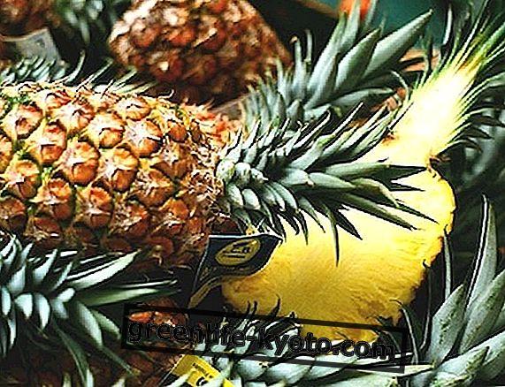 Ananasų kotelis padeda virškinimui